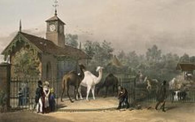 View of the zoological gardens 1835