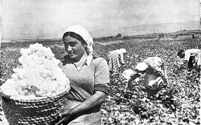 armenian_cotton